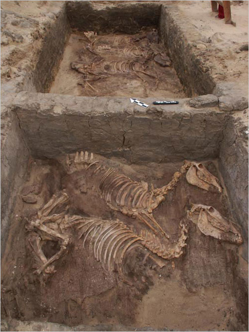 At a funerary complex in Abydos, archaeologists have uncovered the skeletons ...