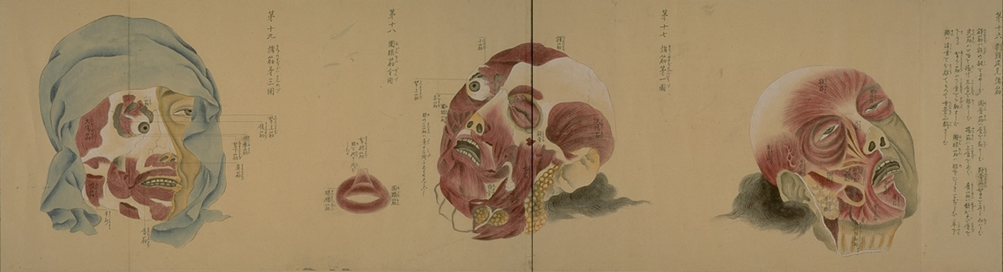 The History Blog » Blog Archive » Minagaki\'s anatomy