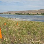 Hanford landfill, flags mark discoveries