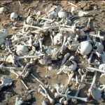 Mass grave with hundreds of leached bones