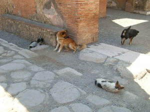 Stray dogs in Pompeii