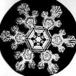 A snow crystal by Wilson A. Bentley
