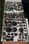 259 9th c. B.C. copper ingots found off the coast of Dover, England