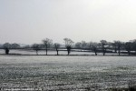 View of Battle of Bosworth field with treeline where Richard III was killed