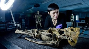 13th c. Tunisian skeleton buried at Ipswich friary