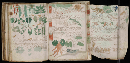 Botanical drawings from the Voynich Manuscript