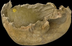 Gough's Cave skull-cup showing cut marks along the edges
