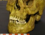 19th century skull with pipe notch center right