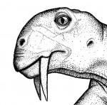 Tiarajudens eccentricus drawing