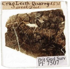 Fossil tree at Craigleith Quarry in Edinburgh, slide by William Nicol, 1831