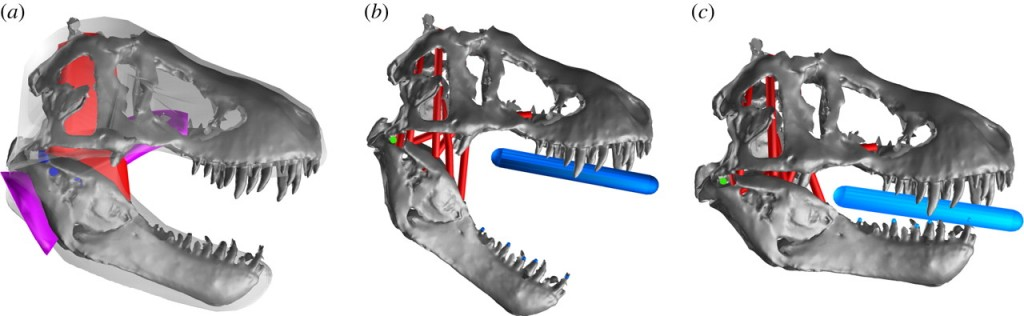 Multi-body dynamic analysis of T-rex bite