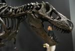 Tyrannosaurus rex poised to bite