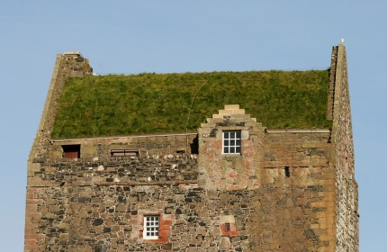 Detail of Smailholm Tower living roof