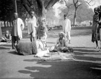 Probable pilgrim with cow and calf, Kolkata ca. 1912