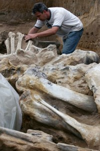 Mammoth bones discovered at Drmno