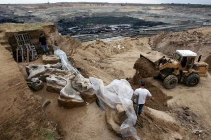 Mammoth bones in the Drmno coal strip mine