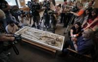 """Sozopol """"vampire"""" skeleton at National Museum of History in Sofia"""