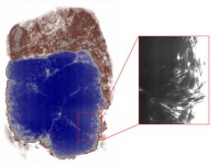 X-ray of soil block, bags of coins in blue