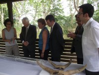 La Draga bow and bovine skulls presented to the press