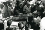 Crowds flock to the bronze as it&#039;s recovered from the sea, 1972
