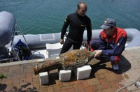 Police divers recover intact amphora from Varazze Roman shipwreck