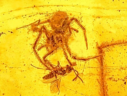 Orb spider attack on parasitic wasp captured in amber 97-100 million years ago