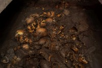 Skulls and mandibles in the pit