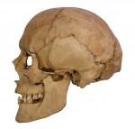 Henry VII's skull