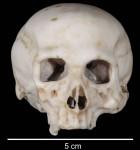 Scale model of a skull made by Leonardo da Vinci, picture by Dr. K. Becker