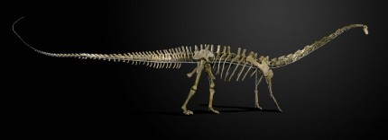 Misty, Diplodocus longus, 160 million years old