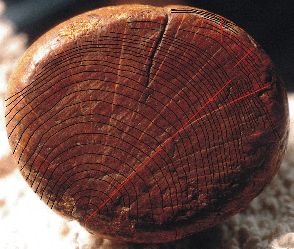 Tree ring dating oldest — 2