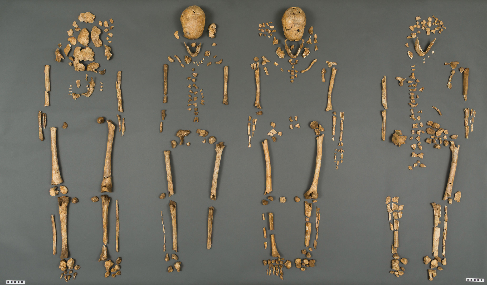 Challenger Human Remains