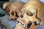 Skulls found in tomb of Userhat. Photo by Reuters.