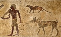 Hunter holds leashes of a dog (bottom) and an Egyptian mongoose (top) in the 11th Dynasty tomb of Baqet I at Beni Hassan. Photo copyright Linda Evans/Australian Center for Egyptology, Macquarie University, Sydney.