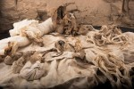 Linen packets with mummification materials found near tomb of Ipi. Photo courtesy the Middle Kingdom Theban Project.