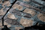 Ribs in dark brown, osteoderms in light brown woven through with grey-blue stone. Photo by Robert Clark for National Geographic.
