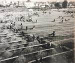Workers remove bodies from a San Francisco graveyard. Photo courtesy Colma Historical Association.