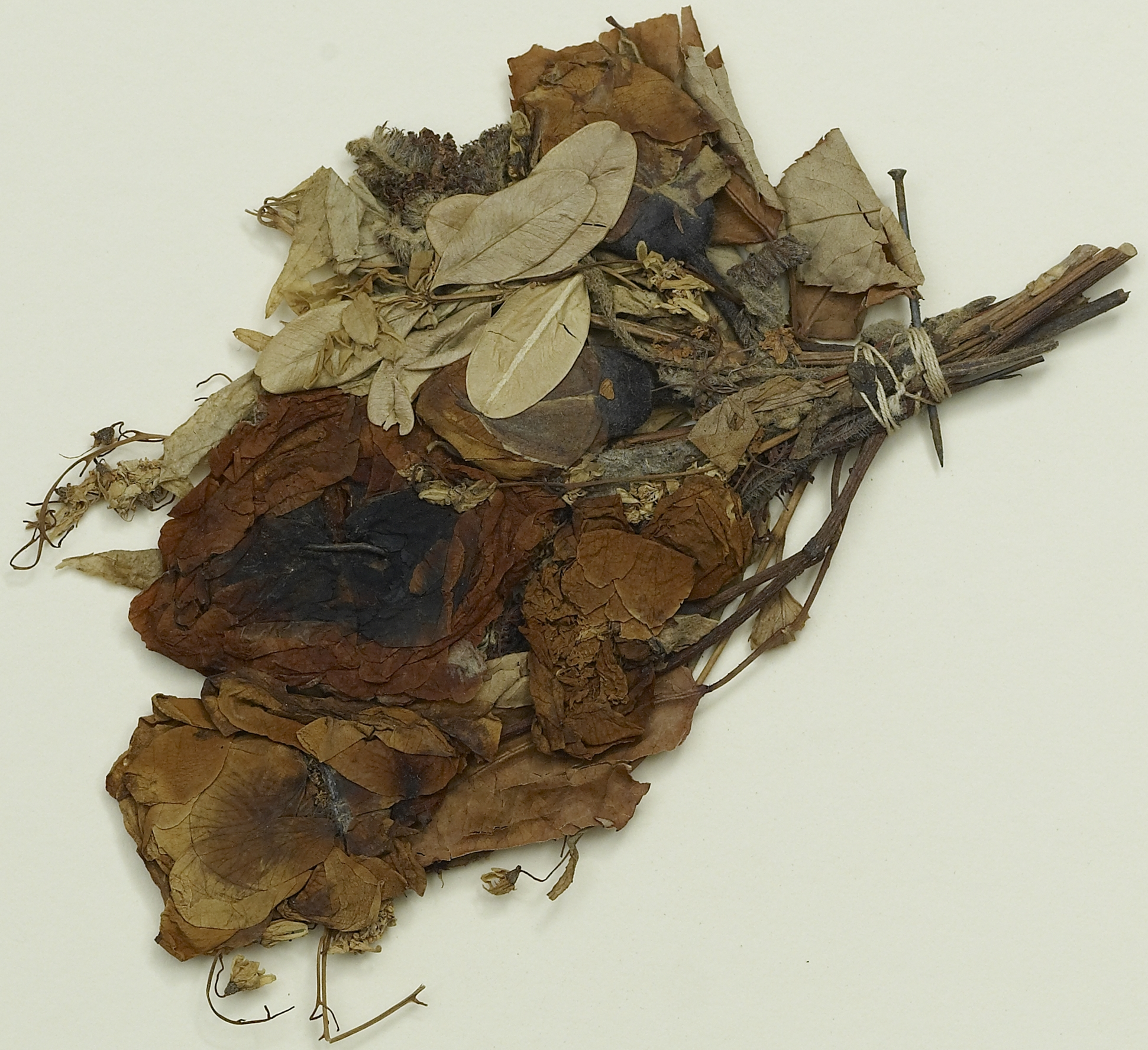 The history blog blog archive dried flower from lincolns bier there izmirmasajfo