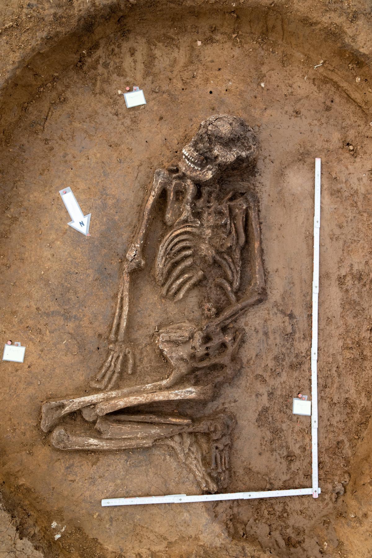 6500-year-old skeleton found in Bavarian cornfield