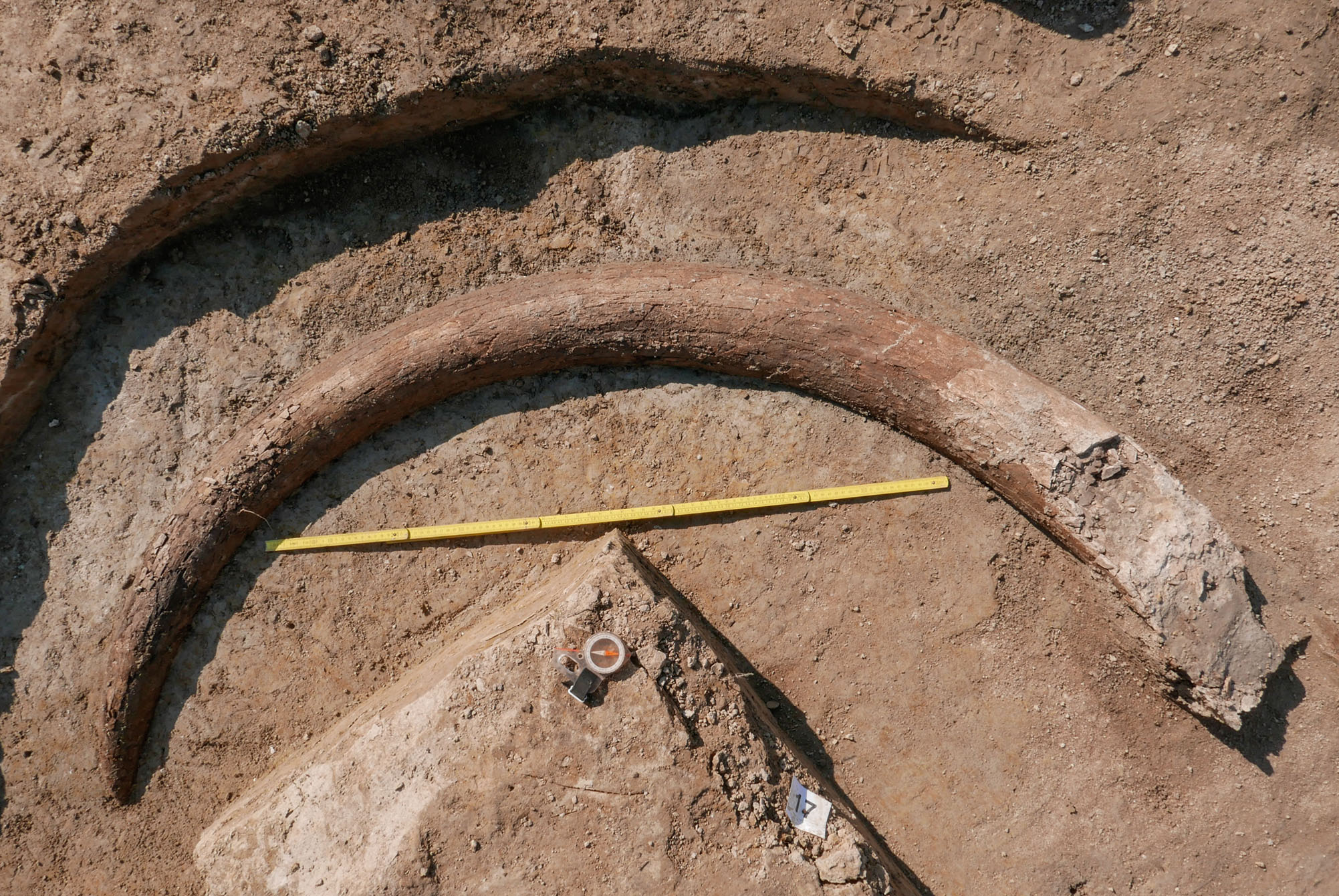 8-foot mammoth tusk found in Bavaria
