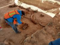 Mammoth remains excavated at Xaltocan. Photo courtesy INAH.