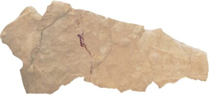 Man gathering honey ca. 7,500 years ago. Image courtesy Martínez et al.